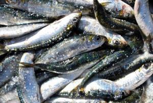 Tapas con Sardinhas - Tapas van Sardines